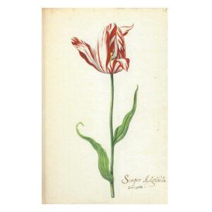 Het Tulpboek
