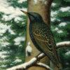 schoolplaten Koekkoek wintervogels